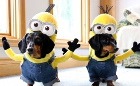 "¡Disfrázate junto con tu mascota! Mejores ideas para un Halloween ""perrón"""