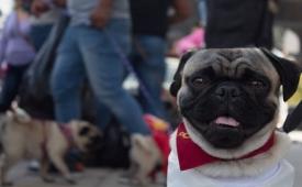 Besar a tu mascota puede afectarte de esta manera tu salud