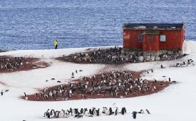 El Polo Sur se está calentando más rápido que el resto del mundo, así puedes ayudar