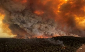 Millones de animales muertos por incendios en Australia
